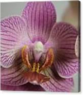 Orchids1 Canvas Print