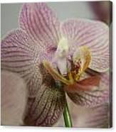 Orchids5 Canvas Print