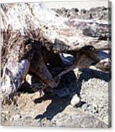 Oregon Beach - Driftwood Trunk Canvas Print