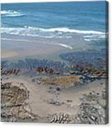 Oregon Coast Beauty Canvas Print