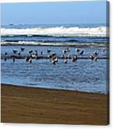 Oregon Coast Seabirds Canvas Print