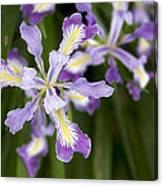 Oregon Irises In Bloom Closeup Canvas Print