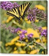 Oregon Swallowtail In The Garden  Canvas Print