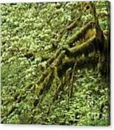Oregon Tree Canvas Print