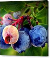 Organic Blues Canvas Print
