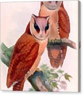 Oriental Bay Owl Canvas Print