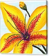 Oriental Daylily Trio Canvas Print