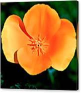 Original Digital Painting Of The California Poppy Canvas Print