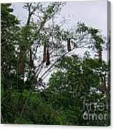 Oriole High Up In The Jungle Canopy Canvas Print