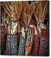 Ornamental Corn Canvas Print