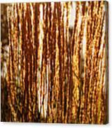 Ornamental Golden Grass Canvas Print