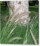 Ornamental Grass Canvas Print