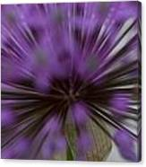 Ornamental Onion Canvas Print