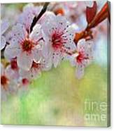 Ornamental Plum II Canvas Print