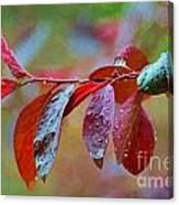 Ornamental Plum Tree Leaves With Raindrops - Digital Paint Canvas Print