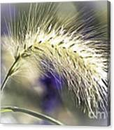 Ornamental Sweet Grass Canvas Print