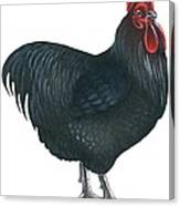 Orpington Rooster Canvas Print