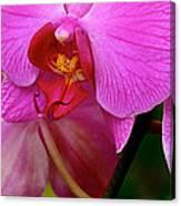 Orquideas Canvas Print