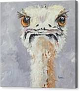 Oscar - An Ostrich Canvas Print