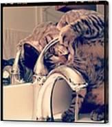 Oskar At The Faucet Canvas Print