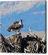 Osprey And Catch Canvas Print