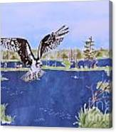 Osprey At Tuttle Marsh Canvas Print