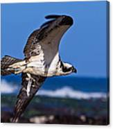 Osprey Bringing Home The Bacon Canvas Print