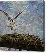 Osprey-coming Home Canvas Print