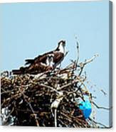 Osprey Couple Canvas Print