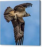 Osprey Flying Away Canvas Print