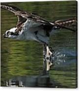 Osprey Hunter Canvas Print