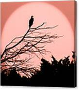 Osprey Moon Canvas Print