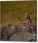 Osprey On A Rock   #7626 Canvas Print