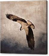 Osprey Over The Columbia River Canvas Print