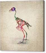 Osteology Of Birds Canvas Print