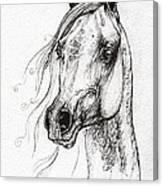 Ostragon Polish Arabian Horse 3 Canvas Print