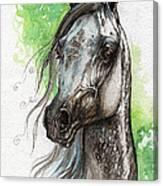 Ostragon Polish Arabian Horse Painting   Canvas Print