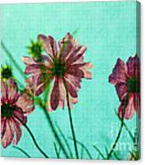Otherworldly Cosmos Flowers In Pink And Green Canvas Print
