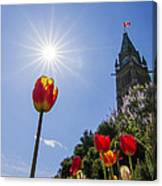 Ottawa Tulip Festival Canvas Print