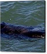 Otter 3 Canvas Print