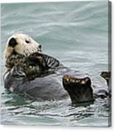 Otter At Play Canvas Print