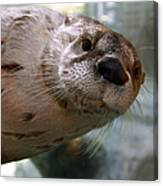 Otter Be Lookin' At You Kid Canvas Print