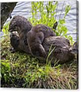 Otter Family Fun Canvas Print