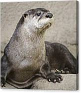 Otter North American  Canvas Print