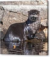 Otter Posing Canvas Print