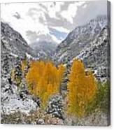 Ouray Fall Colors Canvas Print