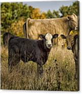 Out For A Graze Canvas Print
