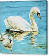 Out For A Morning Swim Canvas Print