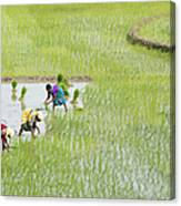 Out In The Fields Canvas Print