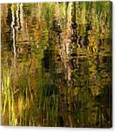 Out In The Reeds Canvas Print